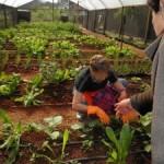 Produção orgânica em Parelheiros. Foto: Blog Horta Orgânica em Casa